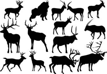 fourteen horned animals