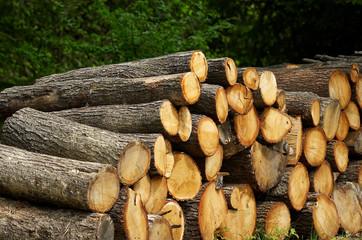 Stack of oak log