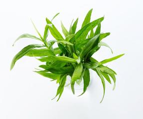 Close up of tarragon herb