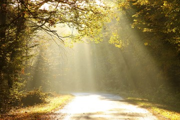 Keuken foto achterwand Bos in mist Autumn scenery of the forest road in the fog at sunrise