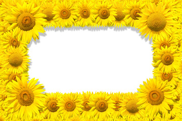 Sunflowers frame on white background