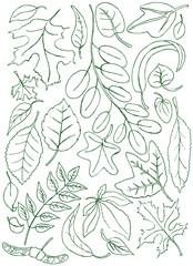 Leaves doodles
