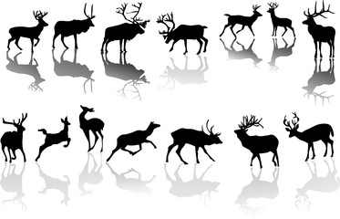 fourteen deers with reflections