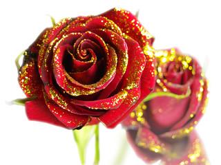 Roses_01