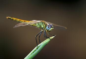 insecto en naturaleza
