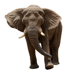 Papiers peints Elephant Elephant