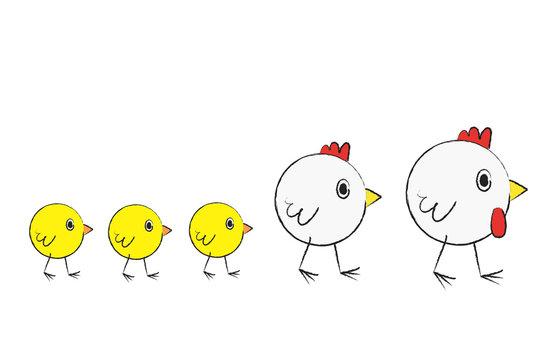 famille de poule