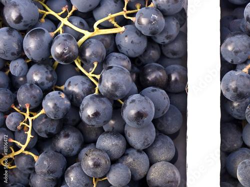 Bilder Blaue Weintrauben ~ blaue Weintrauben