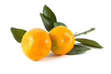 Branch of tangerines isolated on white