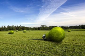lightbulb made of green grass lying on green field.