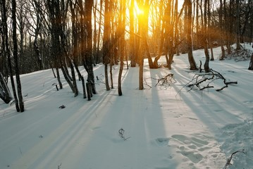 evening in a winter forest