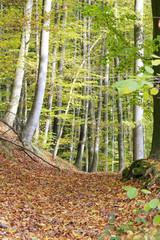 Laubbedeckter Waldweg im Herbst
