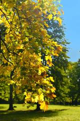 Morning sun in the park in autumn