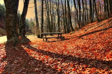 Aire de repos en automne