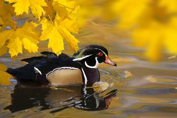Idylle im Herbst