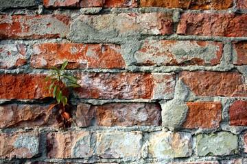 Ziegelwand mit Pflanze