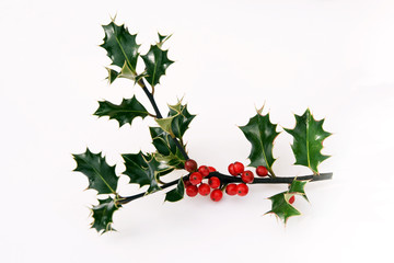 berries along holly sprig