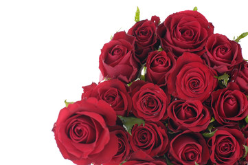 Beautiful Red Roses on white