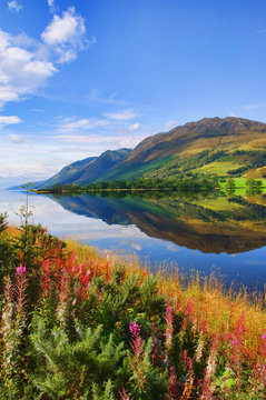 capture of vibrant nature landscape
