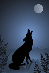 Wild wolf / coyote howling at the full moon