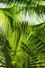 Green Palm Jungle