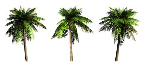 Palms on a white background. 3D art-illustration.
