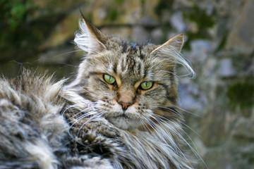 Katze Wild