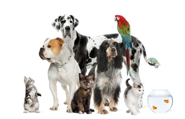 Fototapete - Group of pets standing in front of white background, studio shot