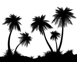 Silhouettes of palms on a white background.