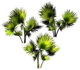 Palms on a white background.
