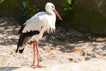 Storch beim Sonnenbad