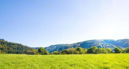 Fototapete - Idyllische Wiese mit blauen Himmel