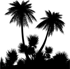 Silhouette of palms on a white background.