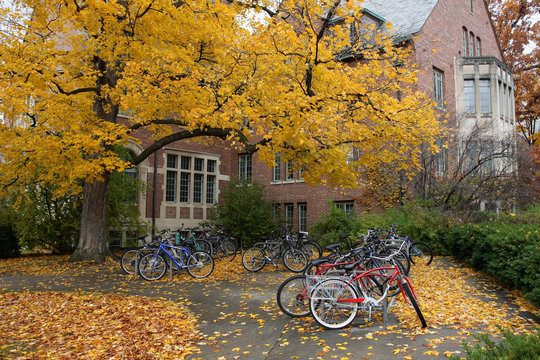 Fall College Campus. University student dorm with autumn leaves