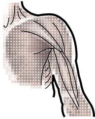 anatomie-muskeln-oberarm-vektor-zeichnung