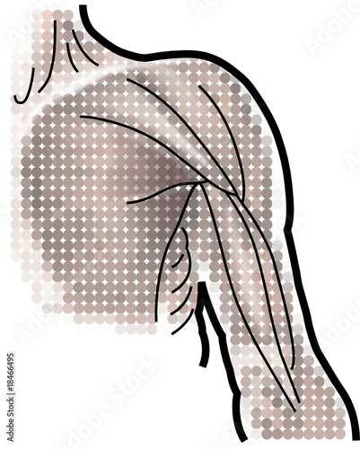 anatomie-muskeln-oberarm-vektor-zeichnung\