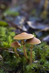 Pilze 3er Gruppe