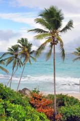 Palme e vegetazione tropicale