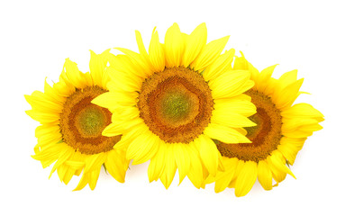 Sunflowers flowers isolated on white