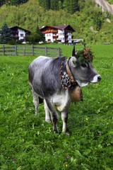 Almabtrieb im Stubaital, Tirol,Oestereich..Almabtrieb im Stubait