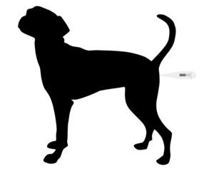 Temperatur messen beim Hund