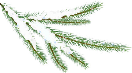 Winter fir twig  (vector illustration)