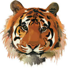 card tiger