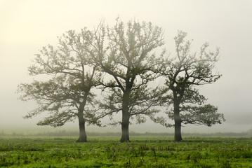 trio d'arbre
