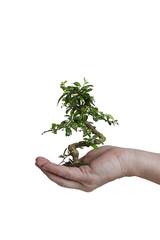 Bonsai in einer Hand