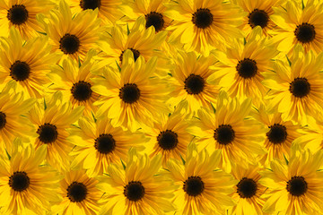 Sunflower texture