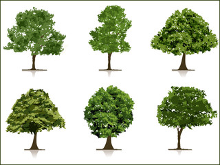 set of trees with background