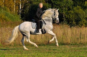 woman on white pura raza espanola horse