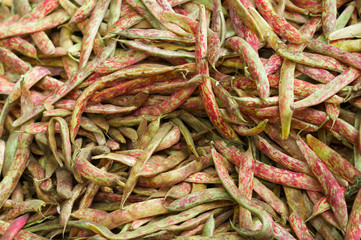 Pile of Cranberry Beans