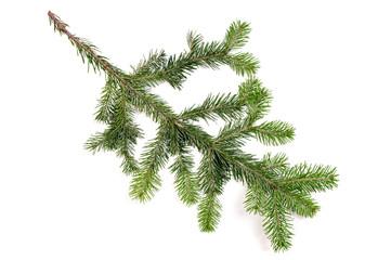 Pine fur tree branch